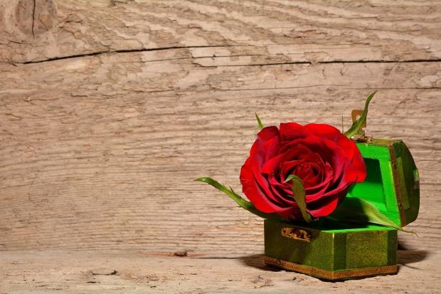 rose in kiste