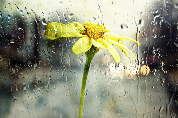 regen blume
